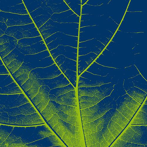 16_naturalia9.jpg